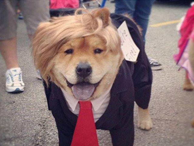 all american pet photo day trump maga